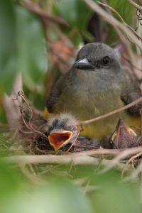 birdsinnest