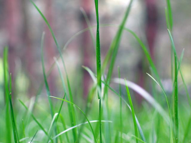 grass-1515341-640x480